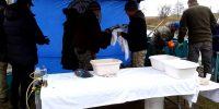 Wycieranie ryby z wody i śluzu